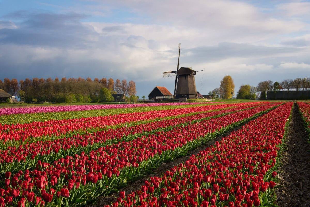 Waarom wonen in Alkmaar perfect is